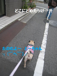 Img_6879_2